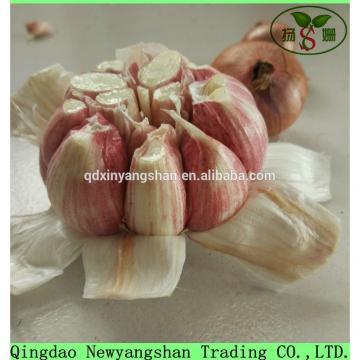 Heallth 2017 year china new crop garlic Benifits  Vegetable  China  Spicy  Garlic