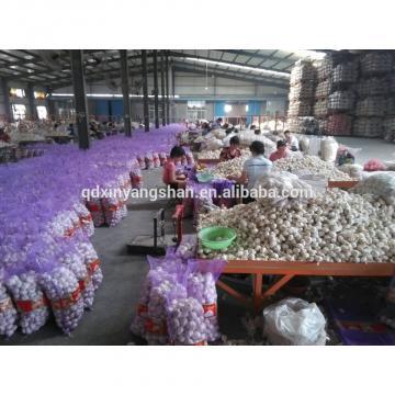 2017 2017 year china new crop garlic Fresh  China  Garlic  Production  Price