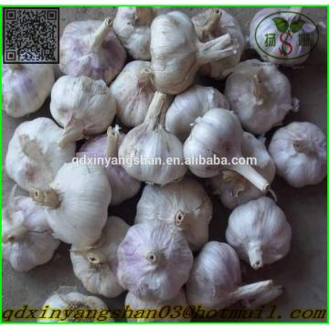 Hot 2017 year china new crop garlic Sale  Chinese  Garlic  With  A Purple White Skin Outside And Each Clove Purple White Skin Inside