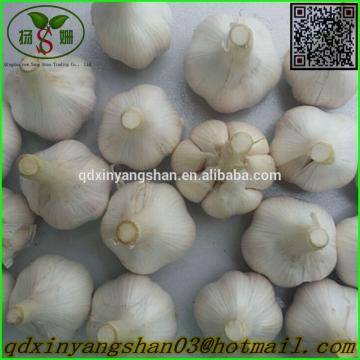 Garlic 2017 year china new crop garlic Production  Peeled  Garlic  Wholesale  Price