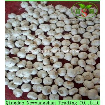 Hot 2017 year china new crop garlic Sale  Chinese  White  Fresh  Spicy Garlic