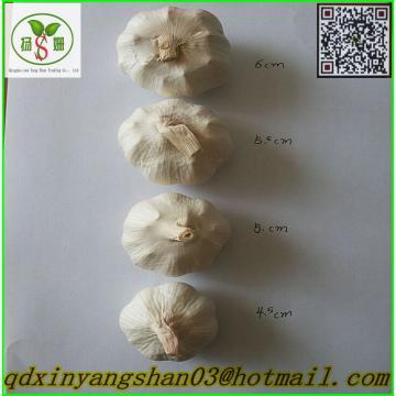 2017 2017 year china new crop garlic Fresh  Garlic  Price  Chinese  Garlic