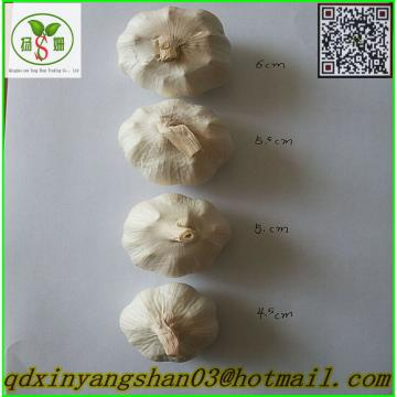 Professional 2017 year china new crop garlic Chinese  Garlic  Supplier  Health  Benifits Fresh White Garlic