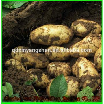 (HOT) 2017 year china new crop garlic Fresh  white  GARLIC/GARLIC  SIZE:  More Than 5CM