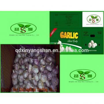 (HOT) 2017 year china new crop garlic Purple  garlic  exporters