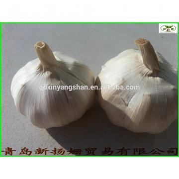 fresh 2017 year china new crop garlic garlic  vegetable  distributor  in  China