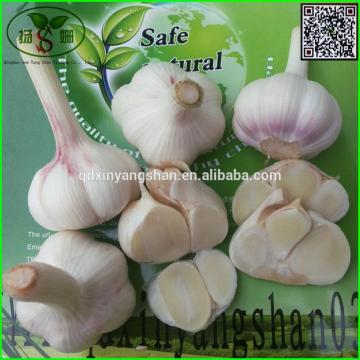 Price 2017 year china new crop garlic Of  Fresh  Chinese  Garlic  Specification 4.5cm 5.0 cm 5.5cm 6.0cm