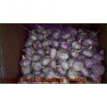 Chinese 2017 year china new crop garlic 2017  Fresh  Garlic  Price  Purple/Red/Pure White Garlic