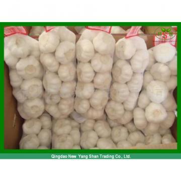 Fresh 2017 year china new crop garlic Chinese  Jinxiang  Garlic  Price  Per Ton Packing In Mesh Bag