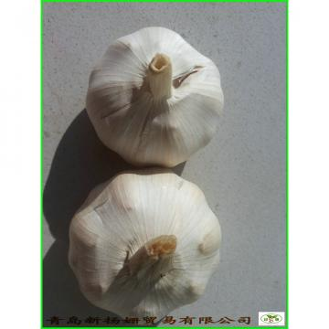 Garlic 2017 year china new crop garlic Wholesale  Price  Per  Ton  normal/Pure/peeled White Garlic