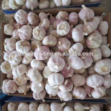 Fresh 2017 year china new crop garlic Garlic  /Fresh  Chinese  Garlic  /Fresh China Garlic