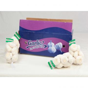 2015 2017 year china new crop garlic new  fresh  garlic