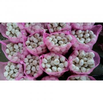 Hot 2017 year china new crop garlic selling  normal  white  fresh  garlic price