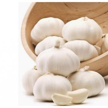Cheap 2017 year china new crop garlic Wholesale  Natural  white  fresh  garlic with mesh bag or ctn