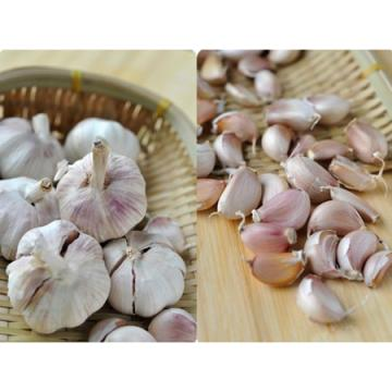 2017 2017 year china new crop garlic fresh  natural  white  garlic  or red garlic