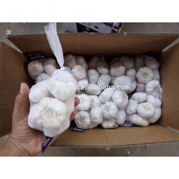 YUYUAN 2017 year china new crop garlic brand  hot  sail  fresh  garlic garlic distributor