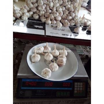 YUYUAN 2017 year china new crop garlic brand  hot  sail  fresh  garlic garlic for the international market