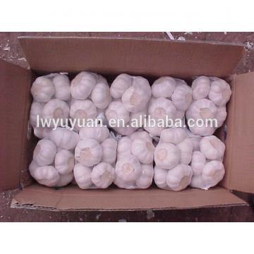 YUYUAN 2017 year china new crop garlic brand  hot  sail  fresh  garlic garlic packing