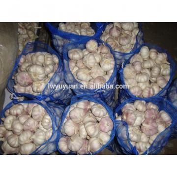 YUYUAN 2017 year china new crop garlic brand  hot  sail  fresh  garlic garlic fermenter