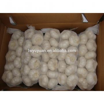 YUYUAN 2017 year china new crop garlic brand  hot  sail  fresh  garlic garlic mesh bag