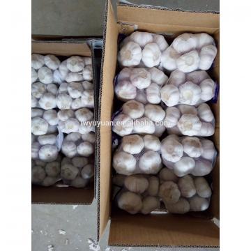 YUYUAN 2017 year china new crop garlic brand  hot  sail  fresh  garlic garlic netherlands