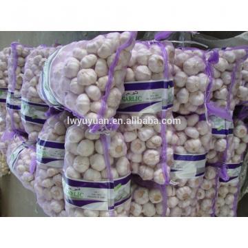 YUYUAN 2017 year china new crop garlic brand  hot  sail  fresh  garlic garlic oil bulk