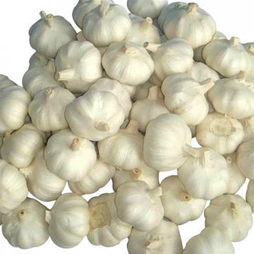 Professional 2017 year china new crop garlic supplier  of  new  harvest  normal white garlic with high quality