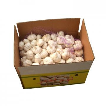 Hot 2017 year china new crop garlic Sale  new  harvest  normal  garlic in brine price with high quality