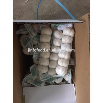 6pcs 2017 year china new crop garlic pure  white  garlic