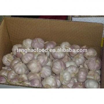 2014 2017 year china new crop garlic new  crop  ,5.5cm  up  ,fresh nomal white garlic