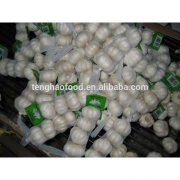 2014 2017 year china new crop garlic new  crop  ,250g/bag  ,fresh  white garlic