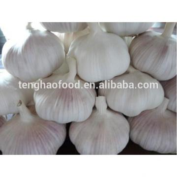 2014 2017 year china new crop garlic new  crop  ,fresh  nomal  white garlic