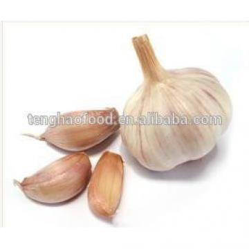 New 2017 year china new crop garlic Crop  5cm-6.5cm  bulk  supply  pure white and normal white fresh garlic