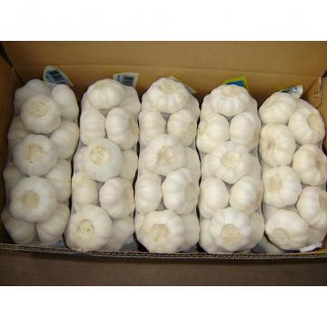 fresh 2017 year china new crop garlic white  garlic