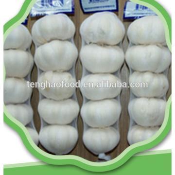 New 2017 year china new crop garlic crop  best  quality  fresh  garlic from China