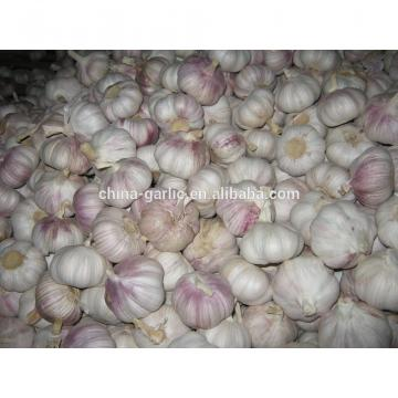 Chinese 2017 New Crop Fresh Garlic Price