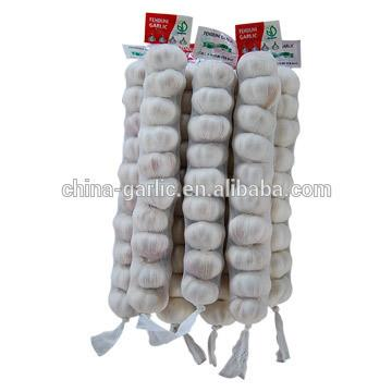 China cold storage fresh Garlic small packing good quality low price