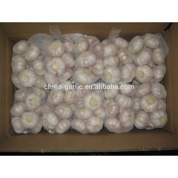 2017 new crop cold storage china fresh garlic