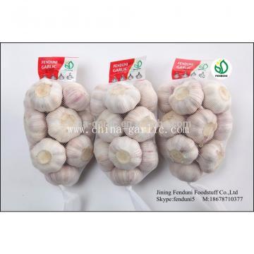 Fresh Red Garlic 2017 Very High Quality Garlic