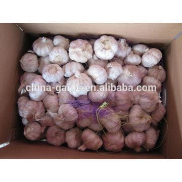 Chinese Fresh Elephant Garlic Import Price