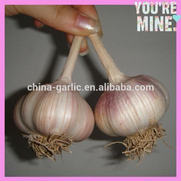 2017 new garlic in usa with best price garlic health benefits