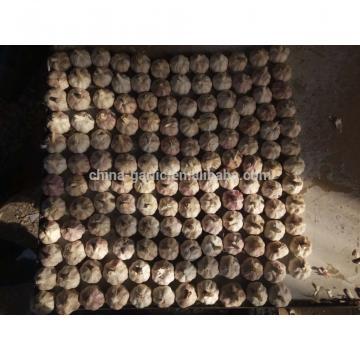 Supply China Garlic New Season 2017 Crop - cheap price
