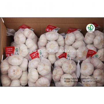 Fresh Ajo En Caja Price From China