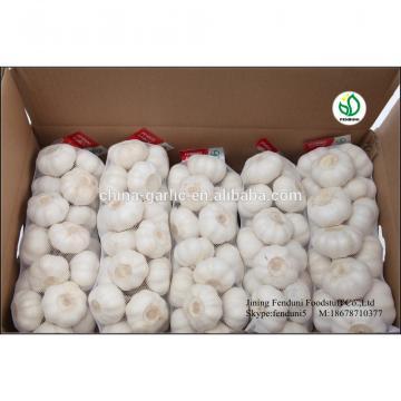 2017 chinese 5cm fresh garlic price new crop best price