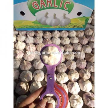2017 crop chinese normal fresh white garlic 5/ 5.5cm