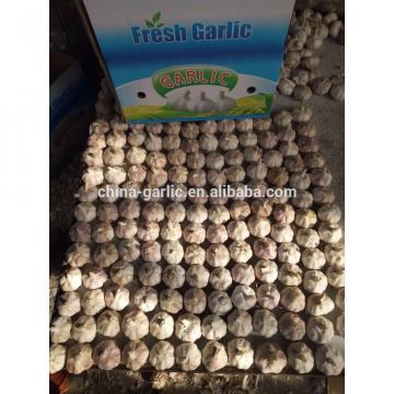 2017 White Common Fresh Garlic
