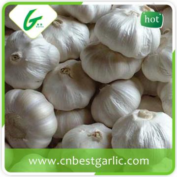 5.5cm fresh big size garlic pure white