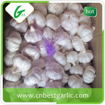 Fresh natural pure white natural garlic supplier