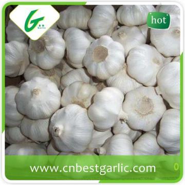 New fresh chinese selected normal white garlic fresh in china