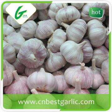 Crop fresh nature white garlic high quality natural garlic for sale